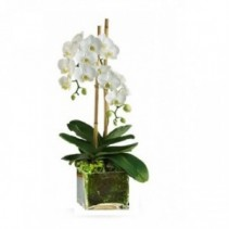 White Orchid Plant in a stylish glass container