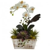White Orchid Plants