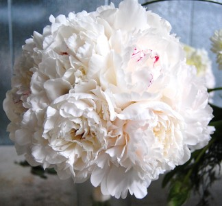 White Peony Bouquet Wedding Bouquets