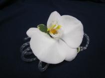 White Phalaenopsis Orchid, Silver Tube Ribbon, $35