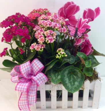 Pink Blooming Picket Fence