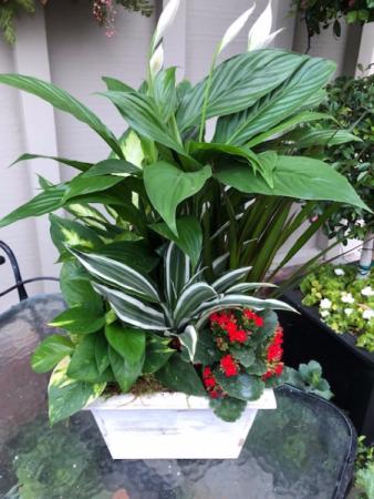 White plant box