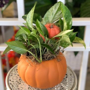 Pumpkin  Green Plant Arrangement