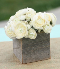 White  ranunculuse  sweetheart  Ranunclucse