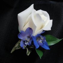 White Rose With Blue Bout Bout