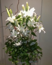 English Ivy with White Lilies va-108
