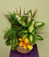 Wicker Basket Dish Garden House Plants