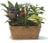 Wicker Dishgarden Planter