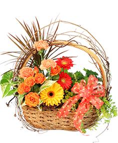 Wild Country Basket Flowering Plants