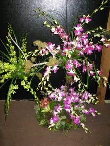 Wild Orchid Tree