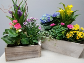 Window Box of Spring plants