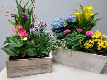 Window Box of Spring plants