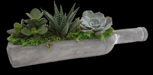 Wine Bottle Succulents  Plant in Newmarket, ON | FLOWERS 'N THINGS FLOWER & GIFT SHOP