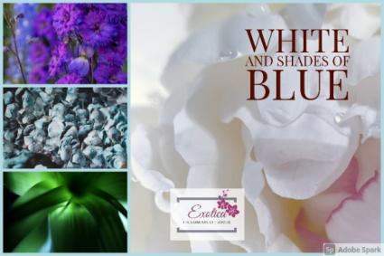 Winter Frost Designers Choice - Vase Arrangement