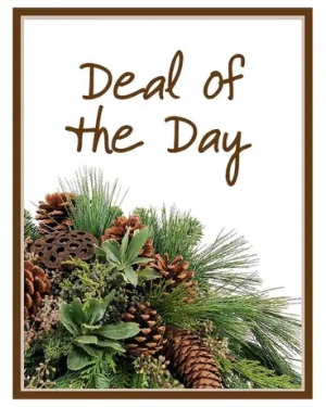 Winter Deal of the Day  in Croton On Hudson, NY   Cooke's Little Shoppe Of Flowers