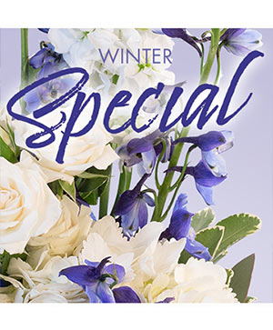 Winter Favorite Designer's Choice in Medfield, MA | Lovell's Florist, Greenhouse & Nursery