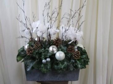 Winter Sparkle Plant Arrangement