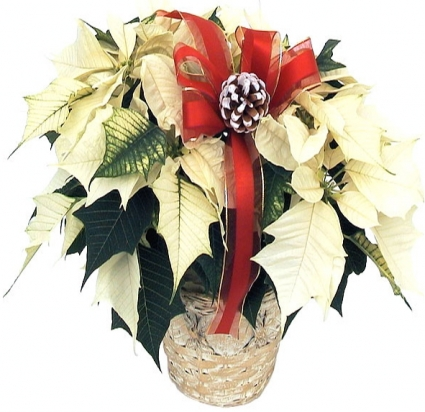 Germantown FLORIST - GENE'S FLORIST & GIFT BASKETS