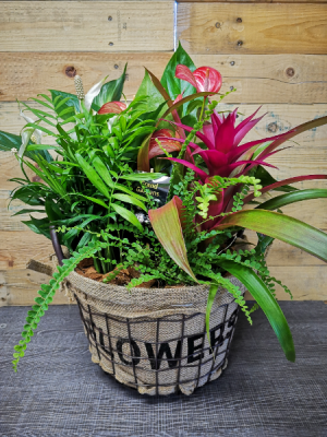 Wire Planter Basket  in Windsor, ON | K. MICHAEL'S FLOWERS & GIFTS