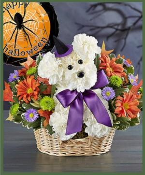 Witchy Pooch  in Arlington, TX | Erinn's Creations Florist