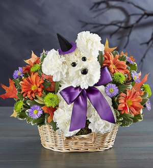 Witchy Pooch Halloween Adogable in Springfield, MO | FLOWERAMA #226