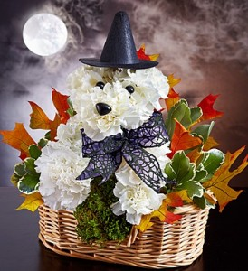 Witchy Pooch™ Halloween in Clarksville, TN | FLOWERS BY TARA AND JEWELRY WORLD
