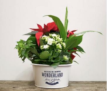 Wonderland Planter
