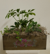 Wood box with real plants Plant