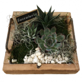 Wood Succulent Tray
