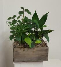 Wooden box indoor green plants