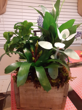 wooden box mixture of green plants and succulent all occasion