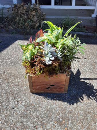 wooden box of green plants and succulents wooden box with mix green plants