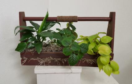 Wooden planter green plants