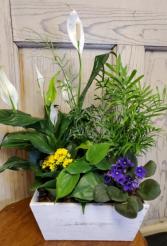 Wooden planter Plants