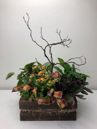 Woodland Blooming Crate Dish Garden
