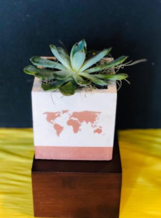World Succulent  Plants