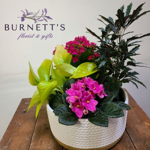 Woven Ceramic Planter Plant in Kelowna, BC   Burnett's Florist