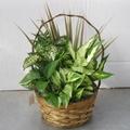Woven Wicker Garden Foliage Basket