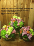 Any color dozen roses arranged in a vase Dozen Long Stemmed Imported Roses