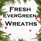 Large Fresh Evergreen Wreaths