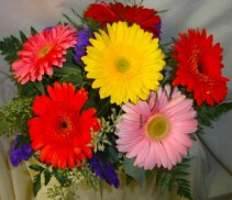 6 LARGE GERBERA DAISIES ARRANGED IN A RECTANGULAR VASE WITH FILLER!!