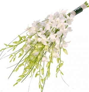 WHITE  PHALAENOPSIS  ORCHID BRIDAL  ARM   BOUQUET in Germantown, MD   GENE'S FLORIST & GIFT BASKETS