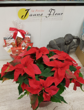 X-Mas Poinsettia SOLD OUT! decorations can be added at the higher price points