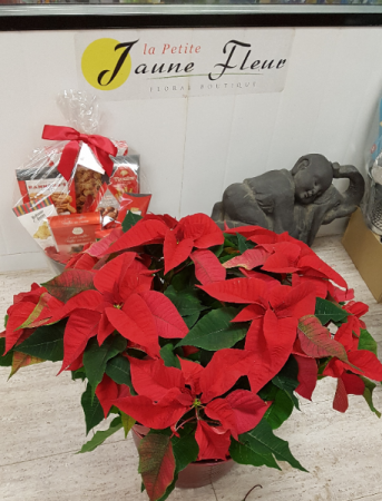 X-Mas Poinsettia (big and beautiful) decorations can be added at the higher price points
