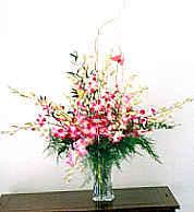 x05 Tropical Designs