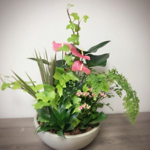 XL Anthurium Planter in Mississauga, ON | ERIN MILLS FLORIST & GIFTS