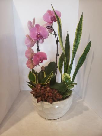 XL orchid Arrangemnet Planter