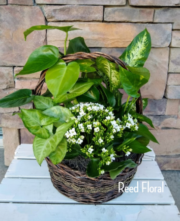 XL Plant & Blooming  Basket
