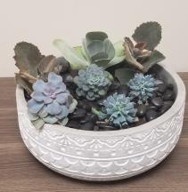 XL Succulent Garden - Stone Ceramic