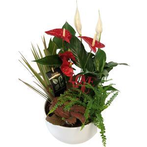 XL Valentine's Anthurium Planter Dish Garden